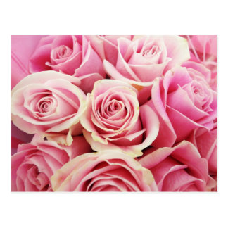 Pink Roses Rose Bouquet Rosey Pink Flowers Bush Postcard