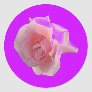 Pink Roses single or a bouquet Classic Round Sticker
