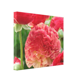 Pink Ruffled Ranunculus Canvas Print