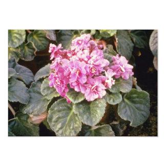 Pink Saintpaulia 'Glowing' (African Violet) flower 13 Cm X 18 Cm Invitation Card
