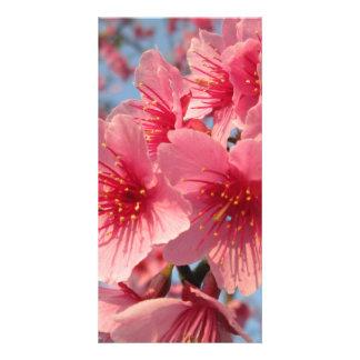 Pink Sakura Cherry Customized Photo Card