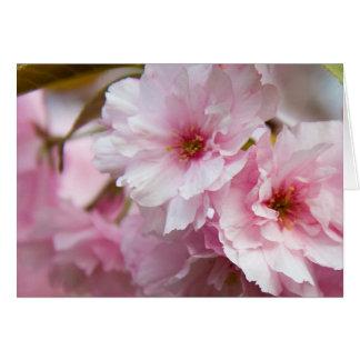 Pink Sakura Flower Card