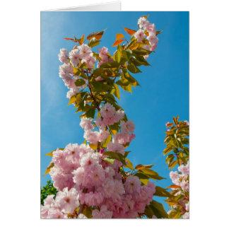 Pink sakura flowers card