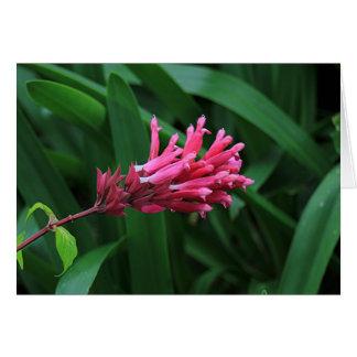 Pink salvia flower greeting card