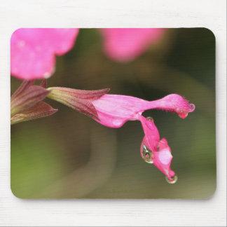 Pink Salvia Mouse Pad