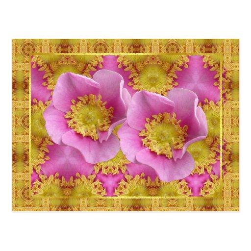 Pink Shrub Roses Post Card