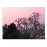 Pink Sky Postcards