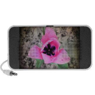Pink Spring Travel Speaker