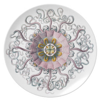 Pink starfish plate