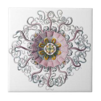 Pink starfish tile