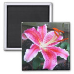 Pink Stargazer Lily Fridge Magnets