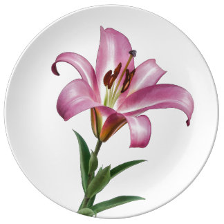 Pink Stargazer Lily on White Plate