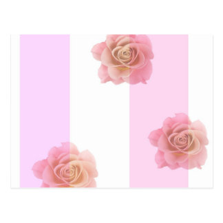 Pink Stripes and Roses Postcard