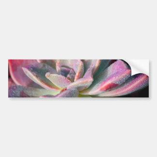 Pink Succulent Bumper Sticker