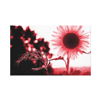 Pink sunflower canvas print