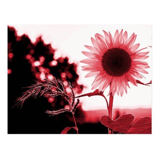 Pink sunflower postcard