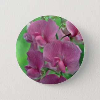 Pink Sweet Pea flowers 6 Cm Round Badge