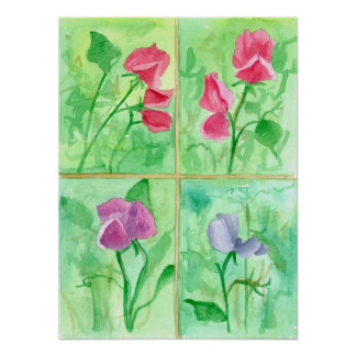 Pink Sweet Pea Flowers Watercolor Painting Poster