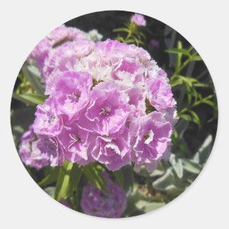 Pink Sweet William Floral Sticker