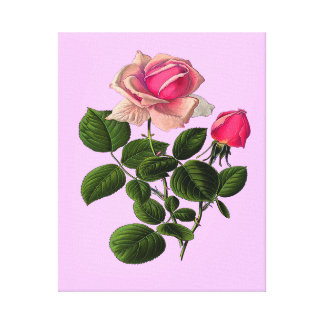 Pink Tea Roses Canvas Print