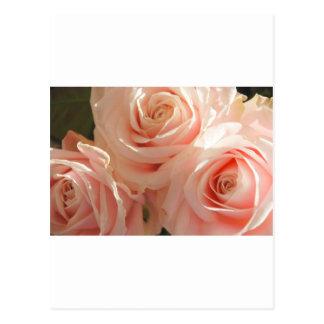 pink tea roses postcard