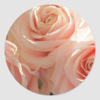 pink tea roses round stickers