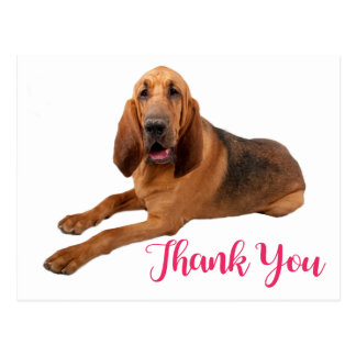 Pink Thank You Bloodhound Puppy Dog Postcard