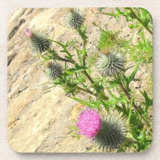 Pink Thistle Cork Coaster