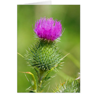 Pink thistle flower blank greetings card