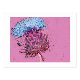 pink thistle postcard