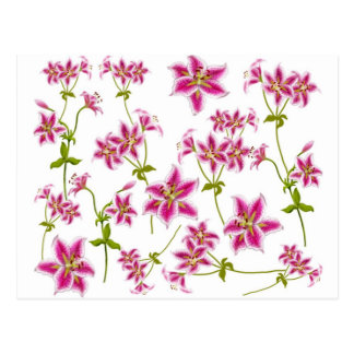 Pink Tiger Lilies Postcard