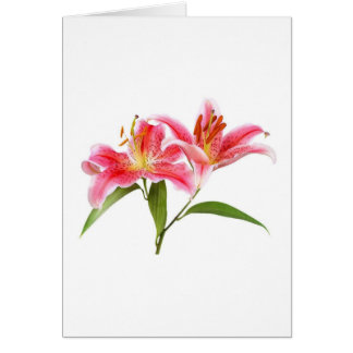 pink tiger lily - customizable greeting card