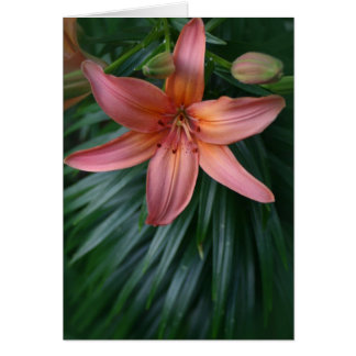 Pink Tiger Lily Flower Greeting Card