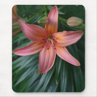 Pink Tiger Lily Flower photograph mousepads