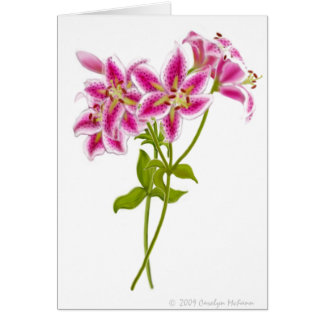 Pink Tiger Lily Greeting Card