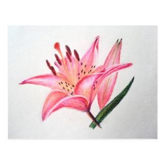 Pink Tiger Lily - Oil pastel print Postcard
