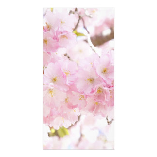 Pink Tree Cherry Blossom Picture Card