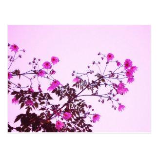 Pink Tree Dahlias Postcard