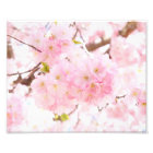 Pink Tree Sakura Cherry Blossom Photo Print