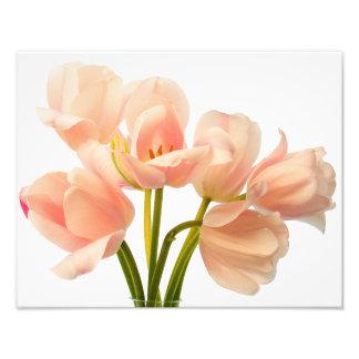 Pink Tulip Flower Peach Tulips White Floral Flower Photo Print