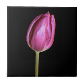 Pink Tulip Flower Photo Solid Black Background Small Square Tile