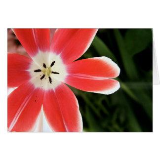 pink tulip light card