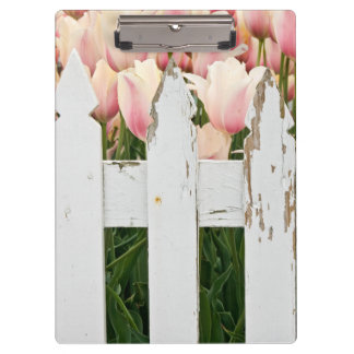 pink tulips and old fence clipboard