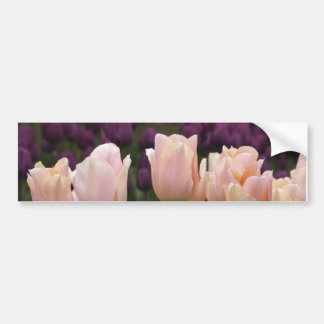 Pink Tulips by Jodi Tripp Bumper Sticker