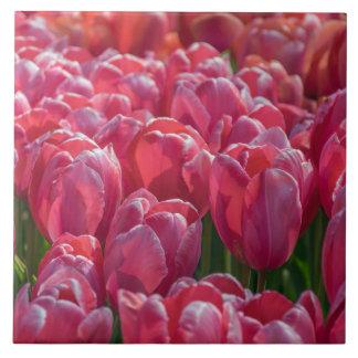 Pink tulips ceramic photo tile