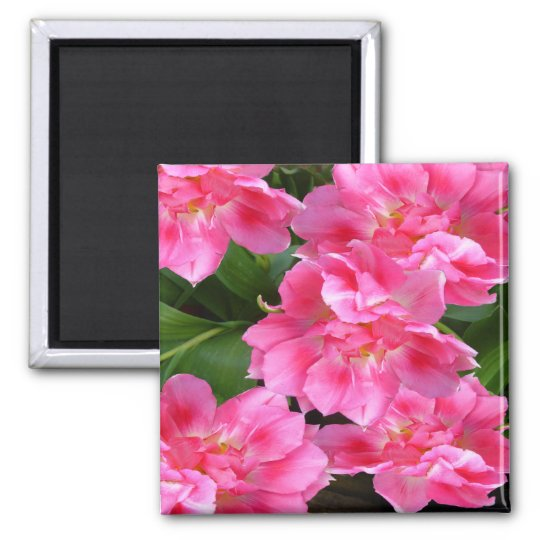 PINK TULIPS ~ Magnet