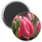 Pink tulips magnet