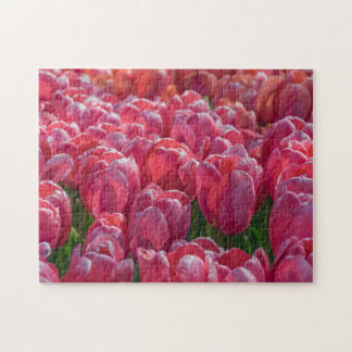 Pink tulips photo puzzle