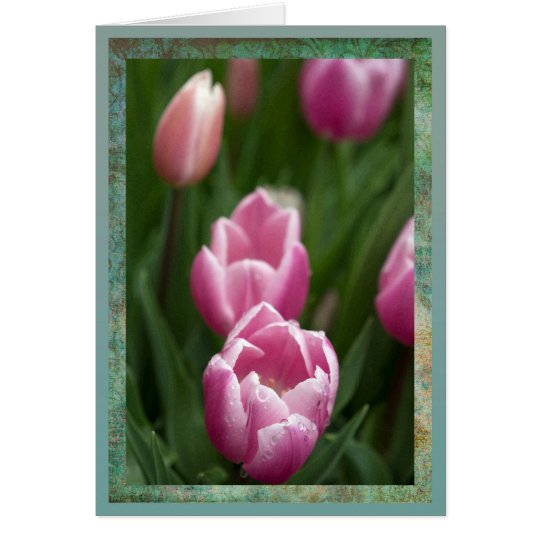Pink tulips with dewdrops card