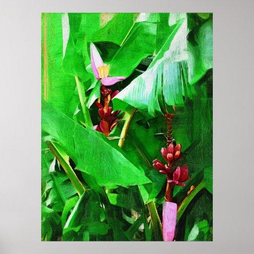 Pink Velvet Banana Tree Tropical Garden Collection Poster